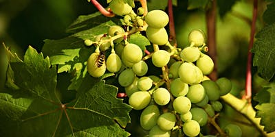 The Great Wine Debate