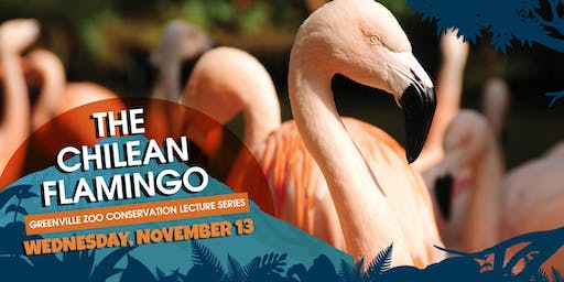 The Chilean Flamingo – Greenville Zoo Conservation Lecture Series