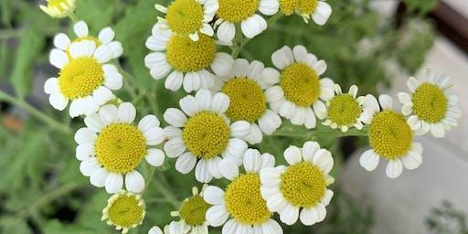Companion planting to create healthier gardens