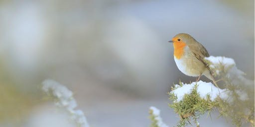 Festive Robin Story and Walk