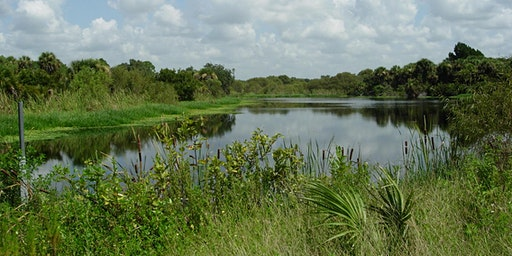 EcoWalk: Unique Preserves of Sarasota County: Curry Creek East