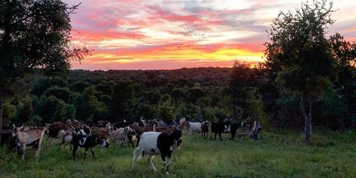 Date Night: A Walk with the Goats