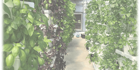 Growing Herbs in Hydroponic Systems tickets