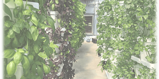 Growing Herbs in Hydroponic Systems