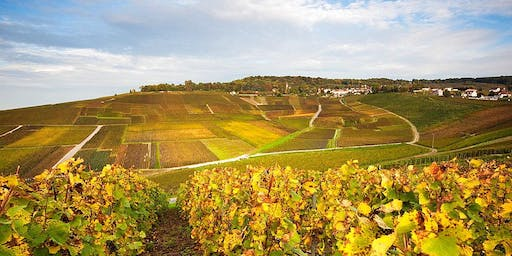 Exploring the Current Landscape of Champagne