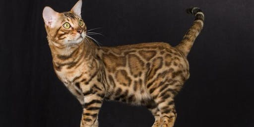 Medina, Ohio Cat Show & Adoption Event