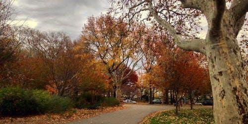 McCarren Park Fall Clean-Up