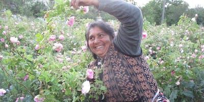 Private Reise zur Rosenernte - Bulgarien 2020