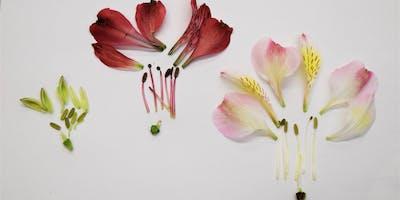 Mid-Winter Break Family Programs: Fantastic Flowers