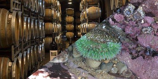 Sonoma Wine Tasting, Coastal Tide Pools & Mussels Picking