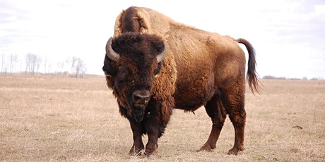 2020 Great Spirit Bison Show and Sale tickets