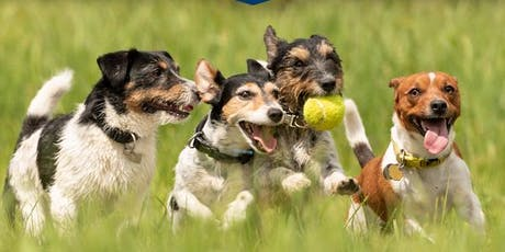 Dogs in the park Port Macqurie tickets