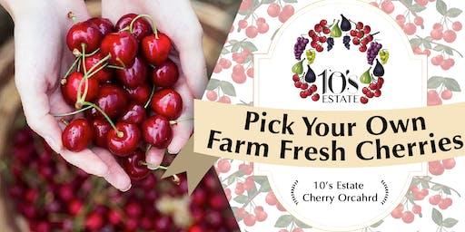 Fruit Picking (cherry) at Mudgee NSW (28 Nov - 1 Dec 2019)