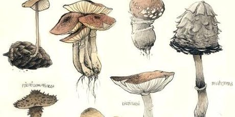 Botanical Illustration of Mushrooms with Sam Feld [ALL AGES] tickets