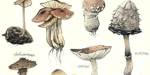 Botanical Illustration of Mushrooms with Sam Feld [ALL AGES]