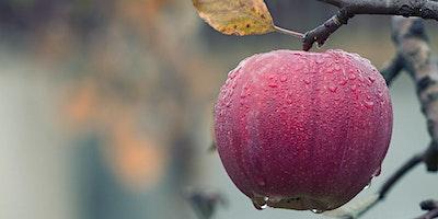 Winter Pruning Fruit Trees