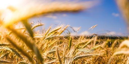 Flourishing Church: Seeking Health & Growth in Your Church