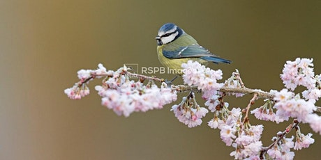 Bird Song Special Walk tickets