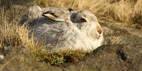 Exclusive Mountain Hare Photography Walk tickets