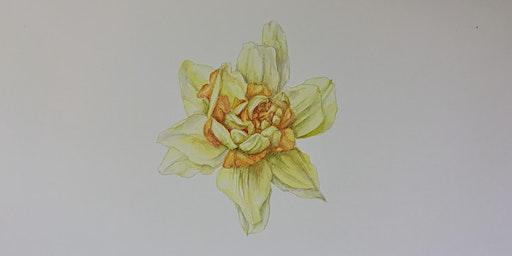 Botanical Drawing Workshop