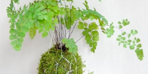 Kokedama and Japanese Gardening