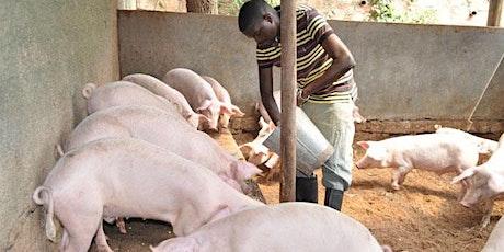PIG FARMING BUSINESS tickets