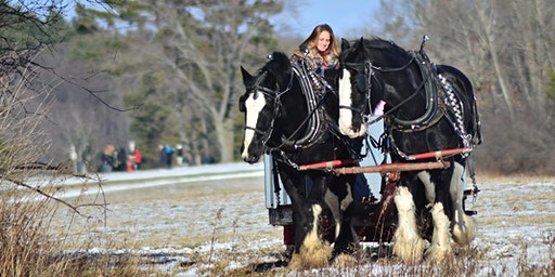 Private Horse-Drawn Rides: December 2019