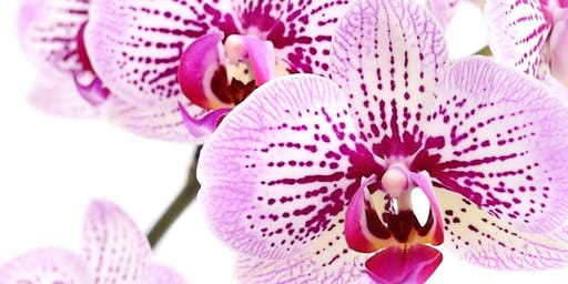 Orchid Workshop - Maryborough Library