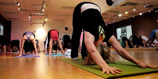 YogaBasics Get Your Body Back (8 Classes) with Ann Hyland