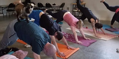 Goat Yoga in Black Creek  (adult class)