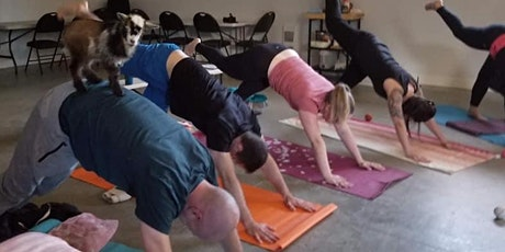 Goat Yoga in Black Creek  (adult class) tickets
