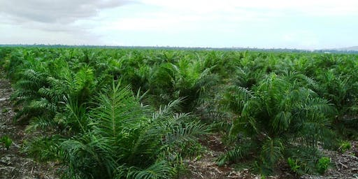 Responsible and Sustainable Palm Oil in Indonesia (RESBOUND) Launch Event