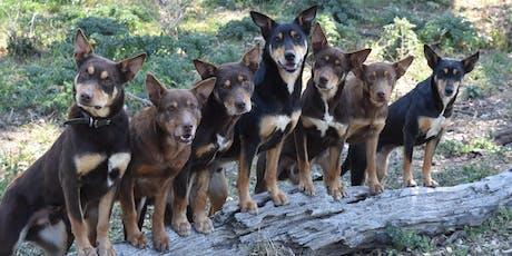 Working Dog School Jan 2020 tickets