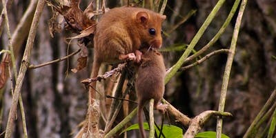 Dormice & Development - Gorsley, Herefordshire