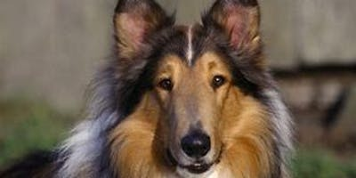 FREE family film - Lassie
