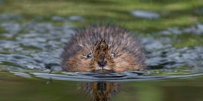 Water Vole Ecology, Mitigation and Live-Capture Techniques