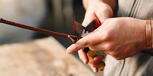 Hardwood Cuttings Workshop / Gweithdy Toriadau Pren Caled
