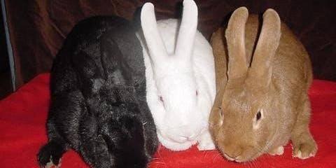 Starting a Rabbitry