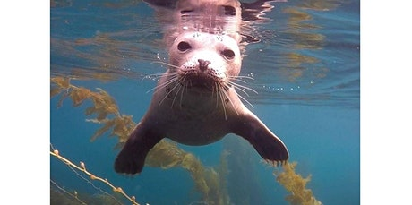 La Jolla Cove Snorkeling Tours (12-23-2019 starts at 9:30 AM) tickets