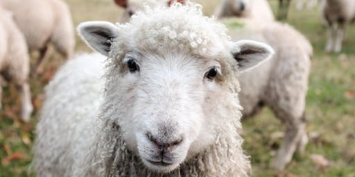 Harvesting and Processing Wool-SPRING ON THE FARM WORKSHOP FESTIVAL