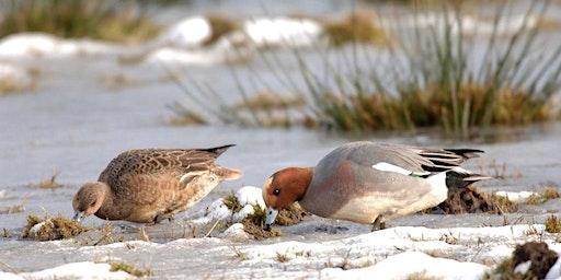 Winter Wonders Bird Identification at RSPB Buckenham Marshes