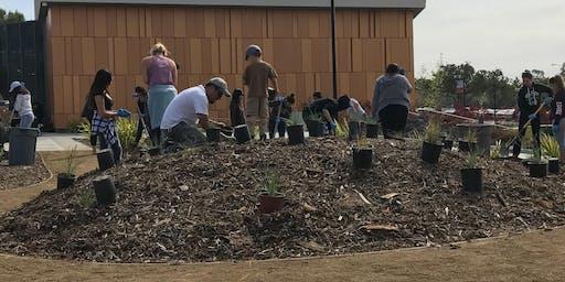 California Native Plant Garden Maintenance: Fall and Winter Tasks