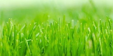 Lawn Care for Spring and Summer Workshop