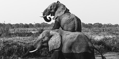 Mindful Storytelling: Animal Journeys tickets