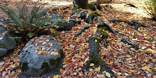 Autumn Immersion, Forest Therapy Walk