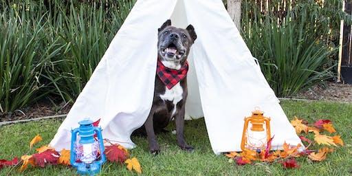 Senior Pet Adoption Fair: Camp Edition