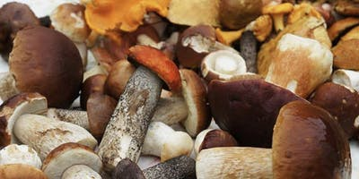 MUSHROOM Growing Make-and-Take Workshop with Cullen Palmisano