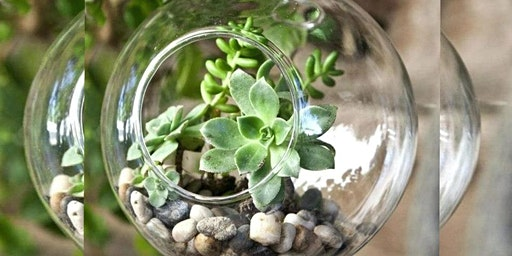 Terrarium Globe Workshop