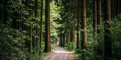 Self Coaching - Wander and Ponder