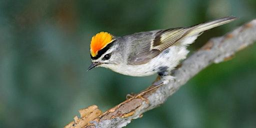 DC Audubon Society Christmas Bird Count at Battery Kemble